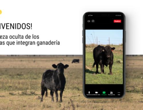 JAT GANADERA- 1 DE JUNIO