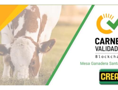 ¡Reviví la charla: Uso de de blokchain en ganadería: carnes validadas!